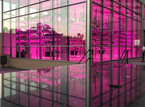Hydroponics Facility - Marriott World Center