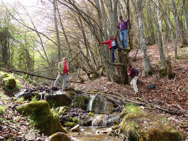 Un arroyo entre las hayas