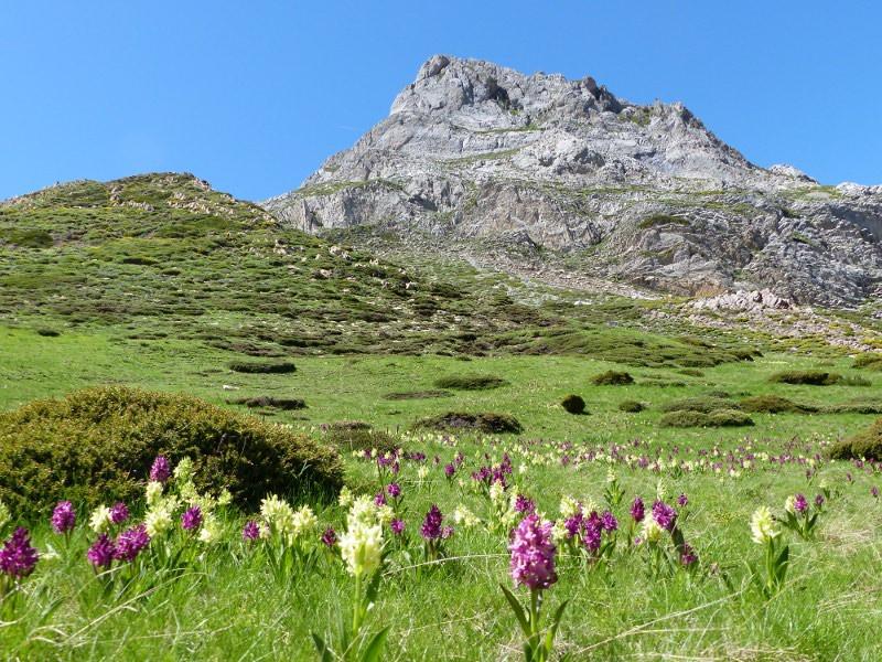 Orquideas y montaña