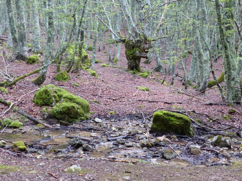 Bosque y regato