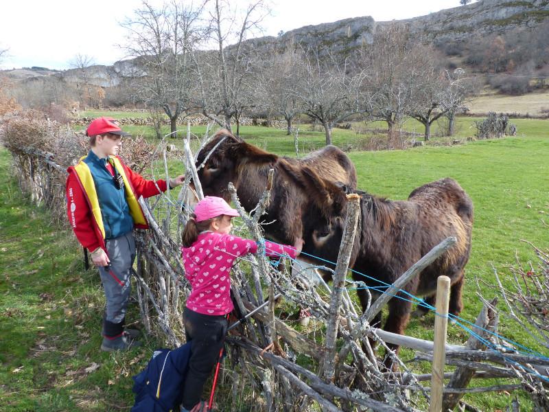 Acariciando burros
