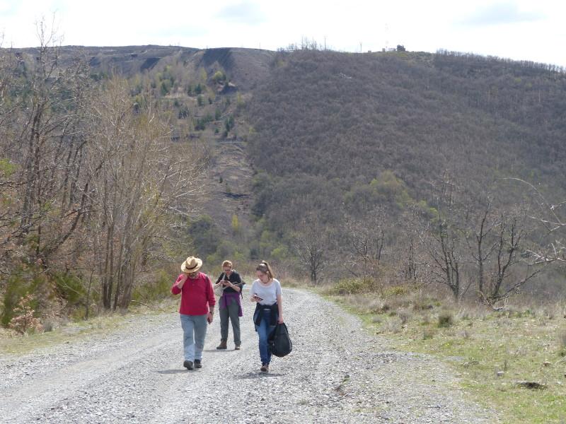 Entre el monte