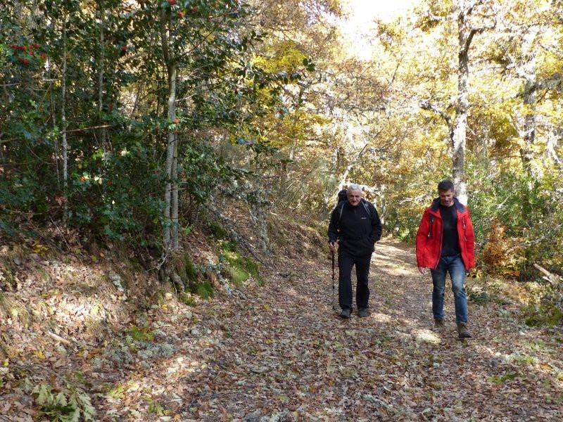 Camino hojas roble