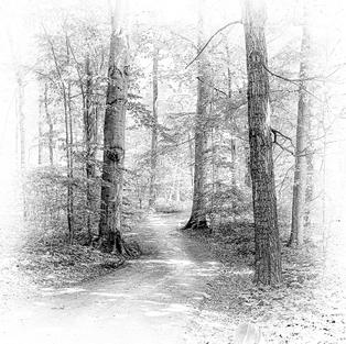 """""""Path in the Woods"""", George Kassal (Photographic Print on Canvas)"""