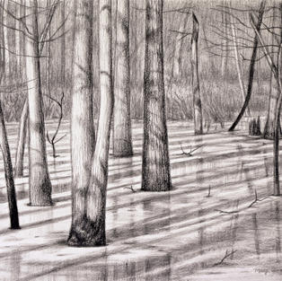 """""""Almost Spring', Mary Ann Pals (Charcoal, Graphite)"""