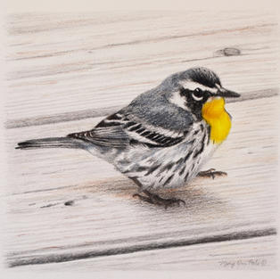 """""""Splash of Yellow"""", Mary Ann Pals (Charcoal, Pastel)"""