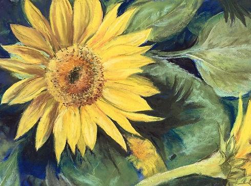 Sunflower_JDavis2020_edited_edited_edite