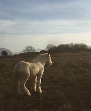cob horse, welsh smallholding, the clean goat soap company