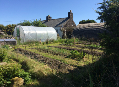 The Kitchen Garden & My Vintage Greenhouse