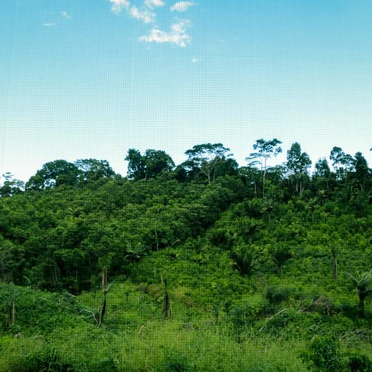Selva de San Alejandro