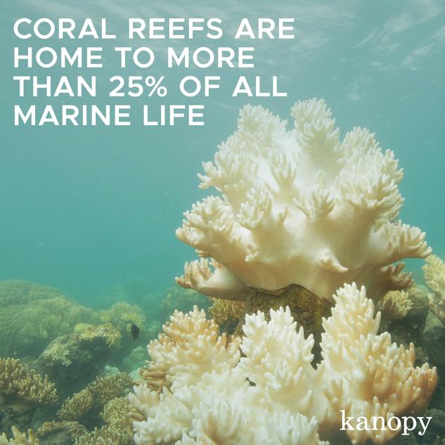 Coral Reef_SEMI.jpg
