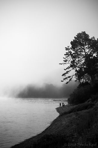 Winter Fog, San Pablo Reservoir