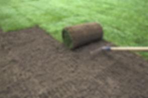 Gardener applying turf rolls in the back