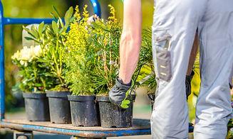 Planting Garden Trees by Caucasian Gardener. Spring Time Landscaping._edited.jpg