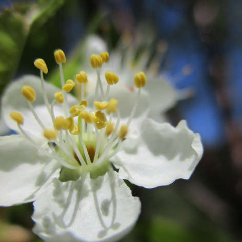 Blossom on a Flowering Mystery Tree