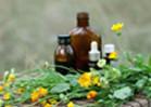 Immune and Antioxidant Enzyme Response of Longfin Yellowtail (Seriola rivoliana)