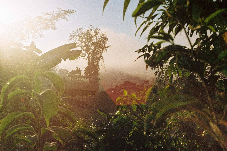 Amazonia Peruana- Buddhy-61