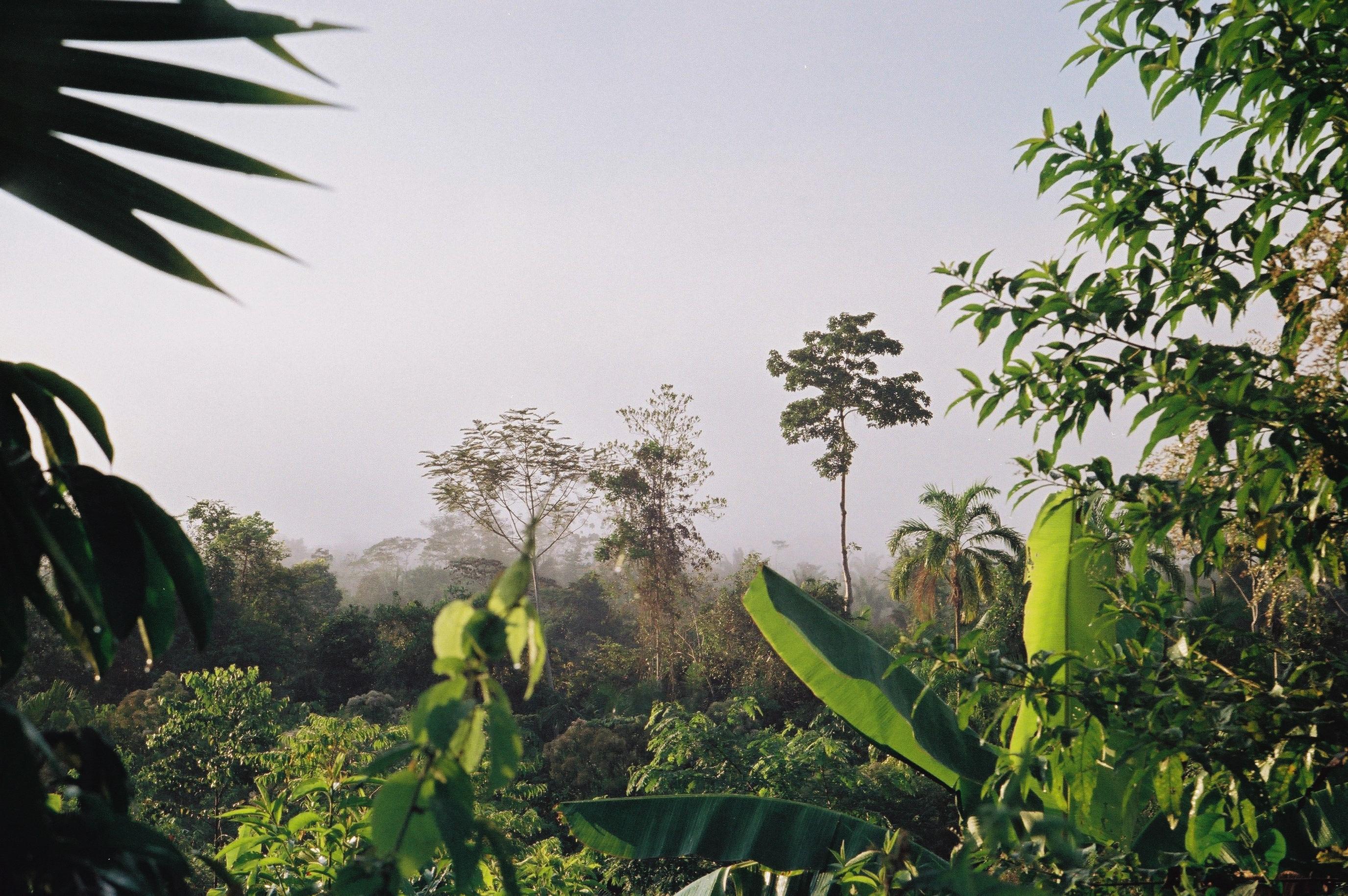 Amazonia Peruana- Buddhy-60