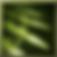 T_Ability_Burst_Shot_active.png