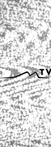maintv-01-01.jpg