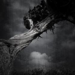 krachtige-boom©ceesrijnen