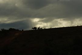 Addo National Park