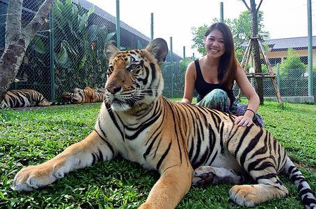 tiger_31.jpg