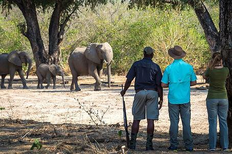 Nature-Walk-Watching-Elephants-On-Safari