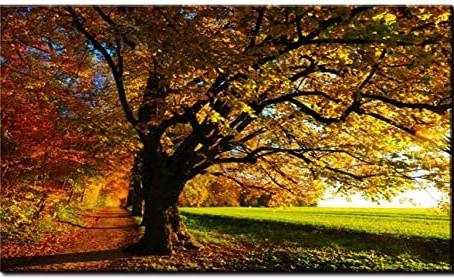 Chegou o Outono!
