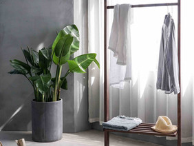 Health Benefits of Owning Houseplants