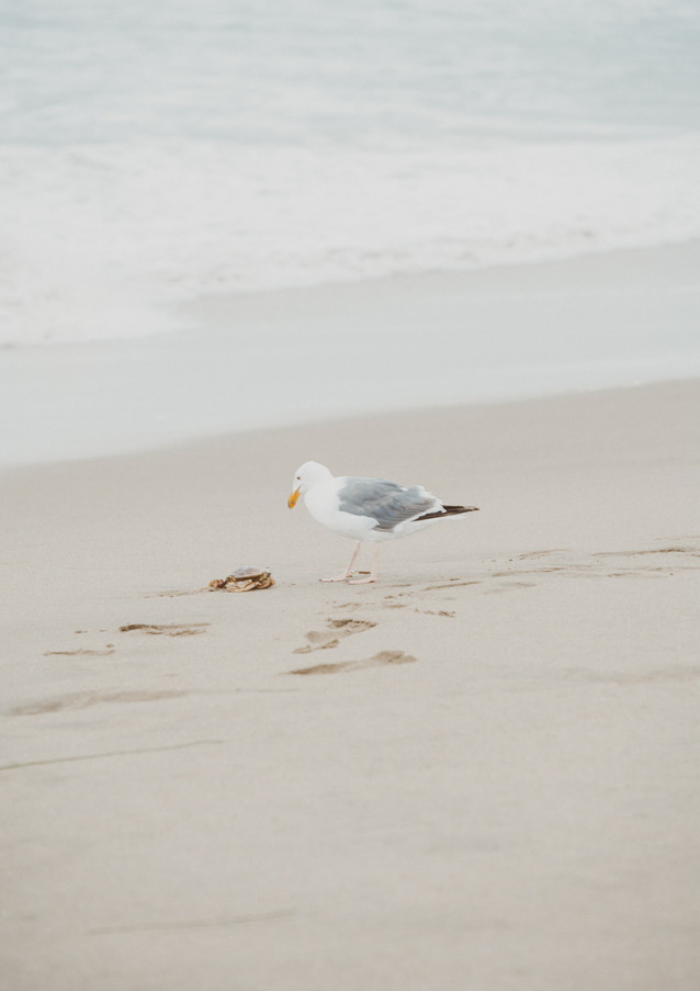 19_08 Beach Family-116.jpg