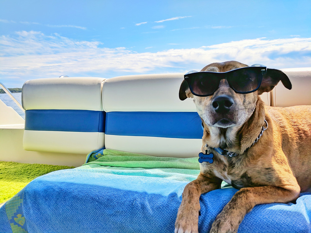 Dog wearing sunglasses on boat