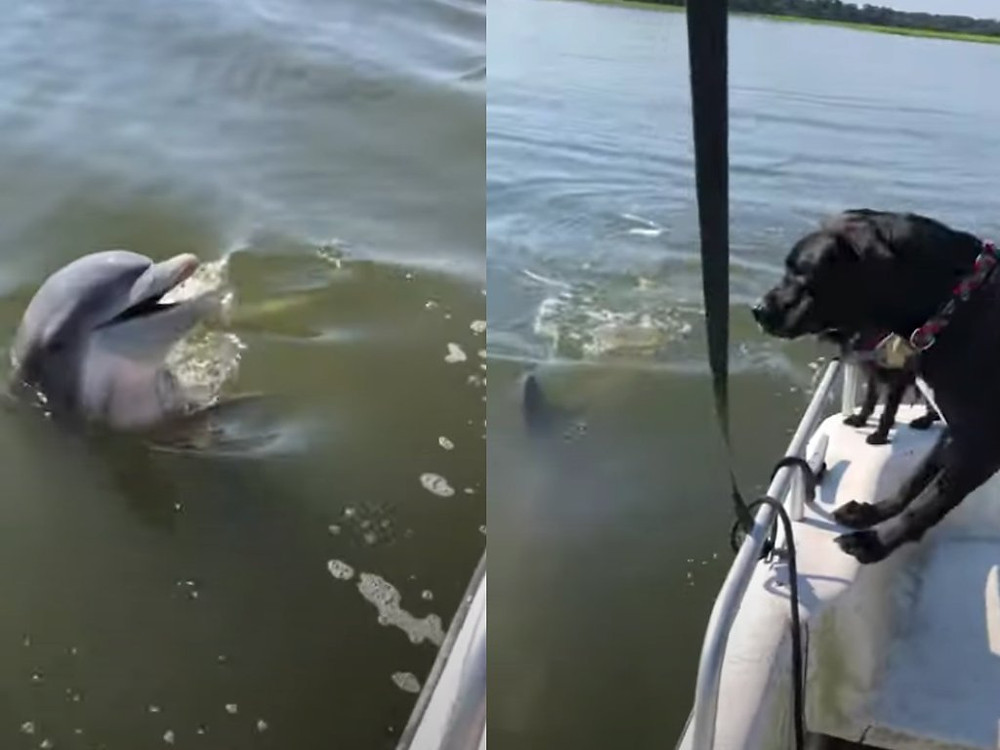 Dog and dolphin interacting