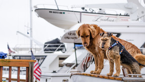 Boating With Your Dog- 7 Tips for a Four-Legged First Mate