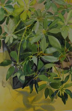 Plant in Black Box