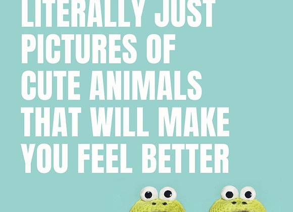 This Book is Literally Just Pictures of Cute Animals that Will Make You Feel Bet