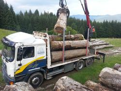 Lavori boschivi di grosse dimensioni