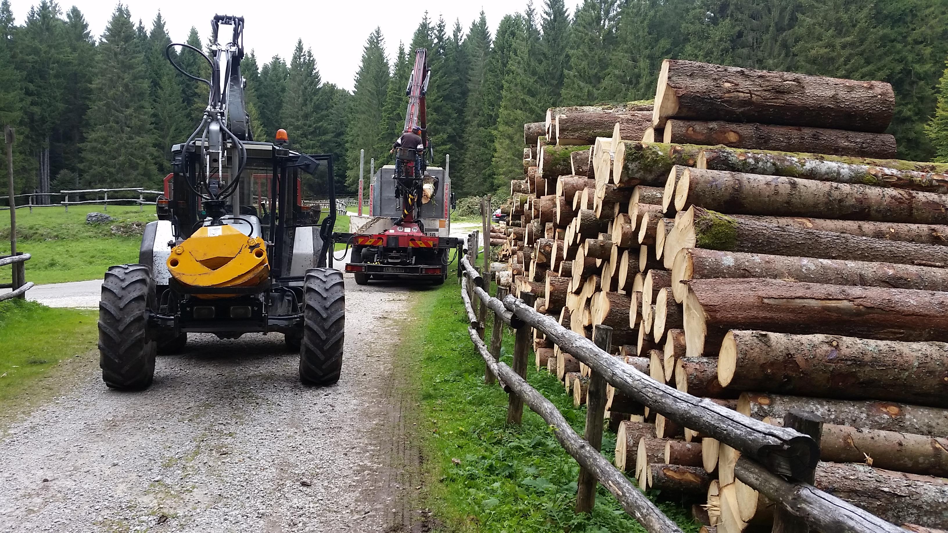 Legname di abete e trattore forestal
