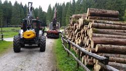 Lavori in boschi di conifere