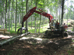 Movimentazione legname