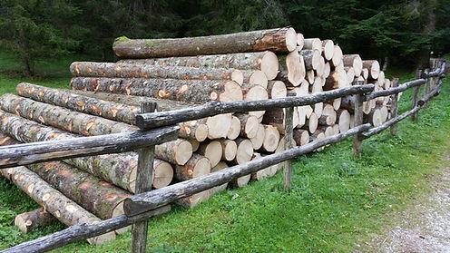 Tronchi di abete in catasta, legname da opera