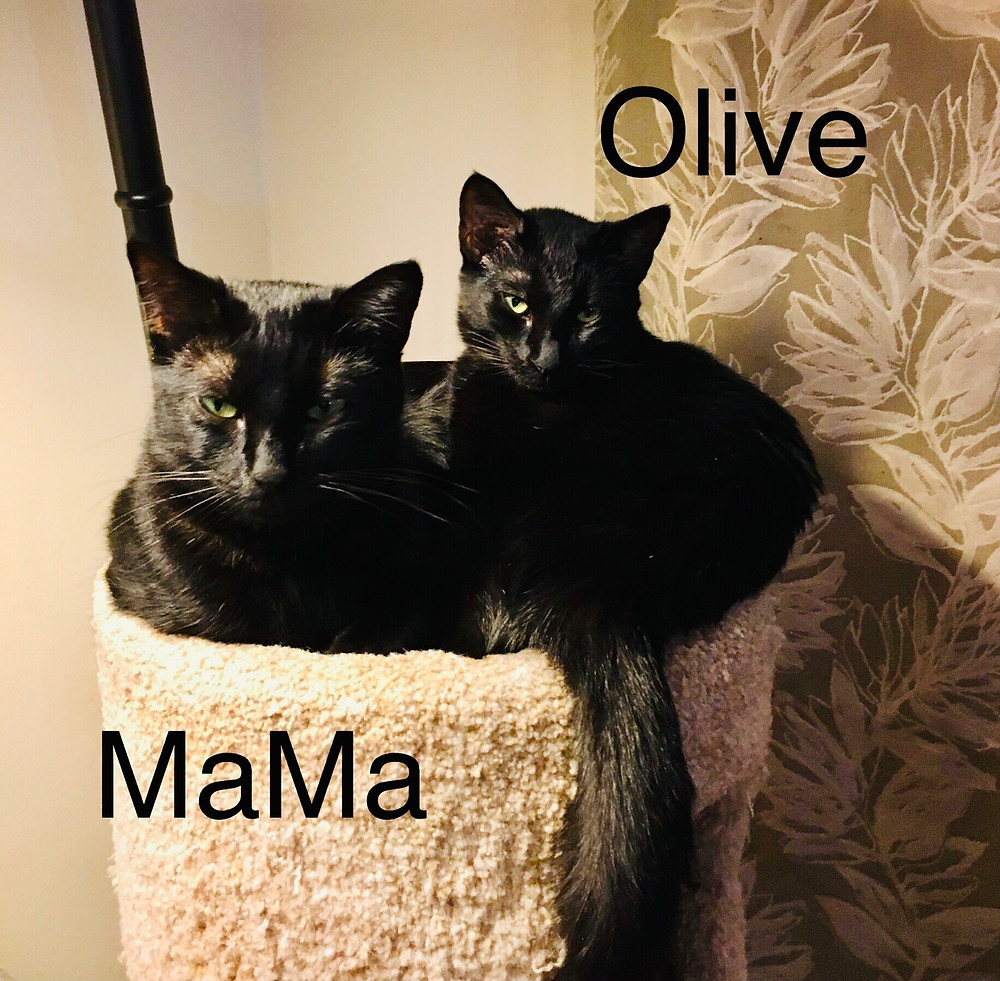 Two black cats snuggled together with text that says MaMa on left and Olive on right