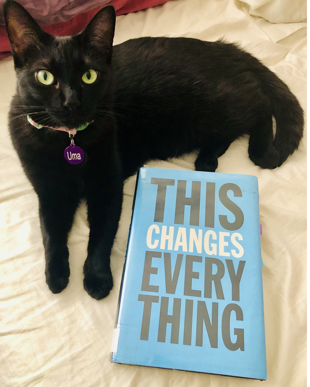Black cat with book This Changes Everything by Naomi Klein