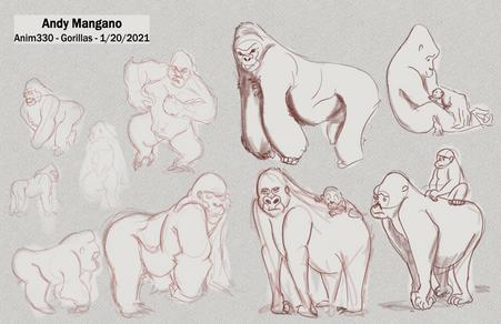 gorilla 1-20-2021.png