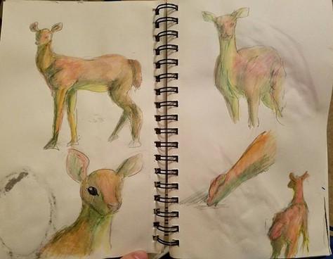 #sketchbook.jpg