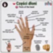 Części dłoni po angielsku.jpg