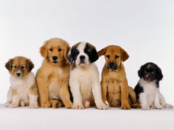 Gregory Comportementaliste Canin