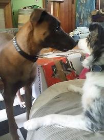 Gregory Comportementaliste Canin Lune et Dack
