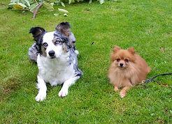 Gregory Comportementaliste Canin Lune et Mr Muggles