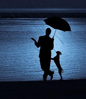 Chien saute sous la pluie